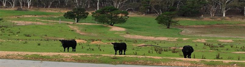 Yarra-Farm-Image2
